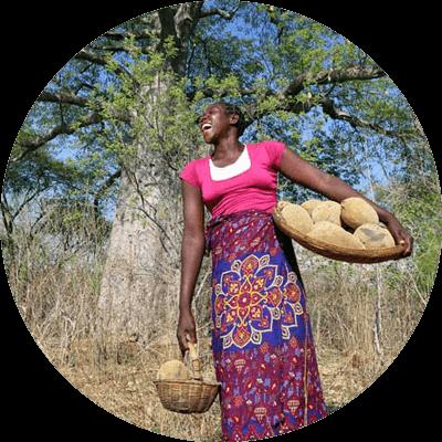 media/image/Baobab-Pulver-Ernte-Simbabwe.png