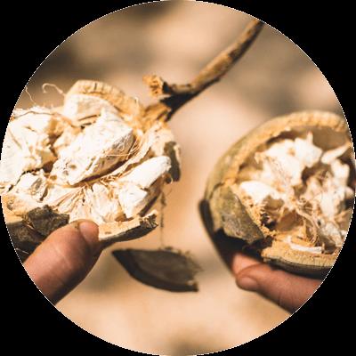 media/image/Baobab-Pulver-Simbabwe.png