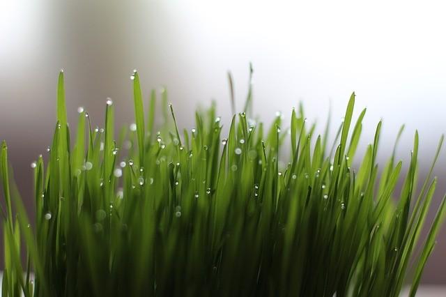 media/image/grass-1524838_640.jpg