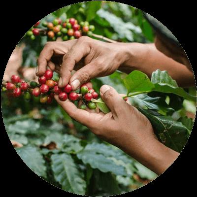 media/image/Mushroom-Coffee-Inhalt.png