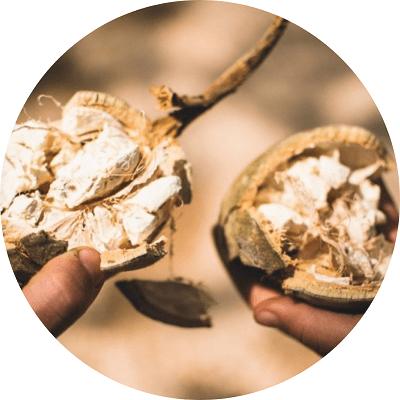 media/image/Bio-Baobab-Pulver-Inhalt.png