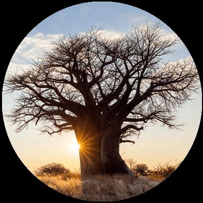 media/image/Buch-Baobab-Affenbrotbaum.png