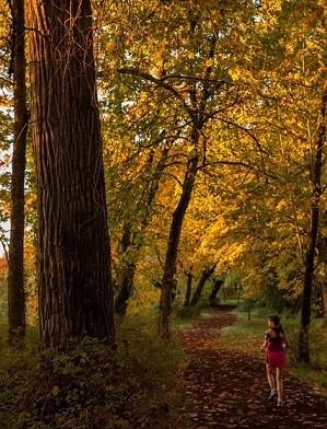 Running through the woods Pixabay Walkersalmanac