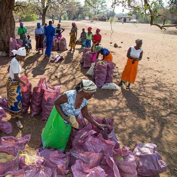 media/image/bio-baobab-aus-afrika-simbabwe.jpg