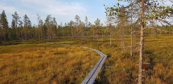 Finnland (2)