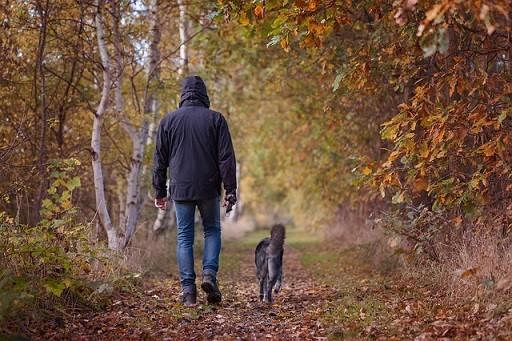 Mann und Hund im Wald Pixabay Schroederhund